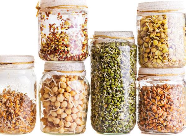О пользе пророщенного зерна